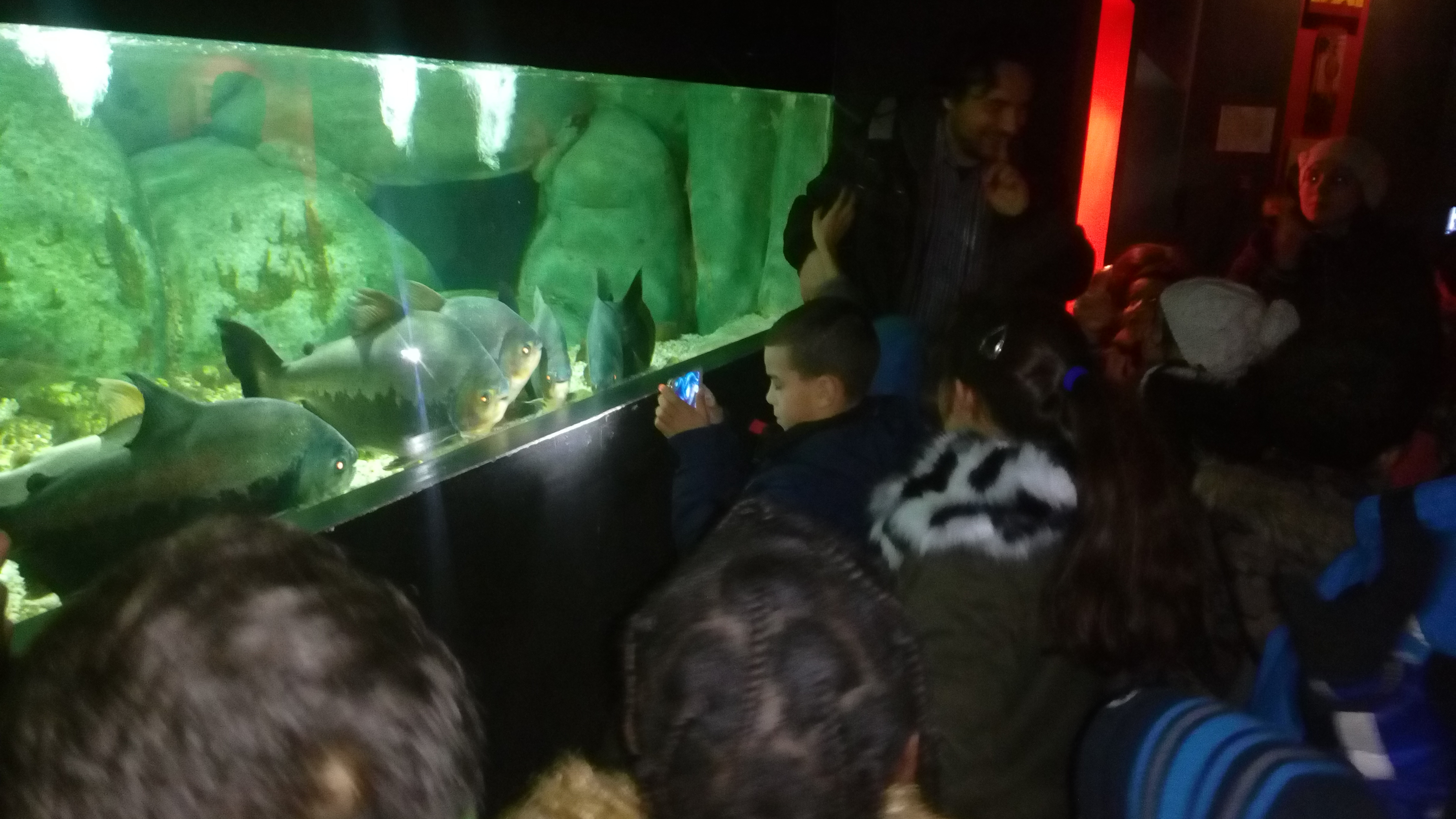 Visite de l'aquarium « Les 3 Vagues »